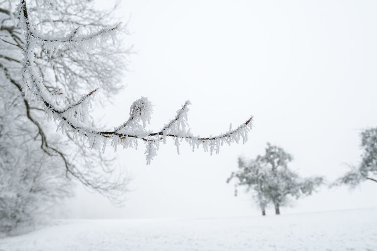 Beauty In Nature Cold Temperature Nature No People Outdoors Snow Tree Winter Winter Trees Winter Wonderland Olympus OM-D E-M5 Mk.II Snow ❄ Schnee White Background Blackandwhite Winterwonderland Wintertime Nebel Fog Lost In The Landscape Lost In The Landscape