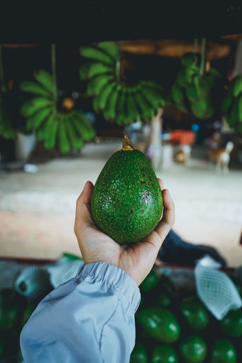 green Avocado roadside shop In Asia on the way Close-up Day Finger Focus On Foreground Food Food And Drink Freshness Fruit Green Color Hand Healthy Eating Holding Human Body Part Human Hand Incidental People One Person Outdoors Personal Perspective Real People Unrecognizable Person Wellbeing