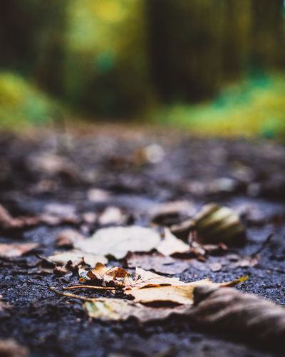 No People Selective Focus Day Outdoors Close-up Nature Colour Of Life Nature On Your Doorstep Nature Photography The Week On EyeEm Beauty In Nature Landscape Nature_collection Landscape_collection EyeEmNatureLover Defocused Rural Scene Scenics Sonya7II Depthphotography Autumn Collection Autumn🍁🍁🍁 Woodland Photography
