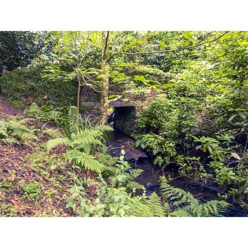 A forest bridge
