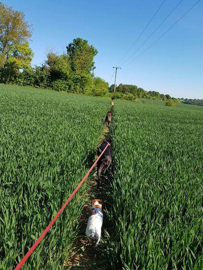 Tea Crop Irrigation Equipment Manual Worker Working Rural Scene Water Spraying Occupation Agriculture Tree