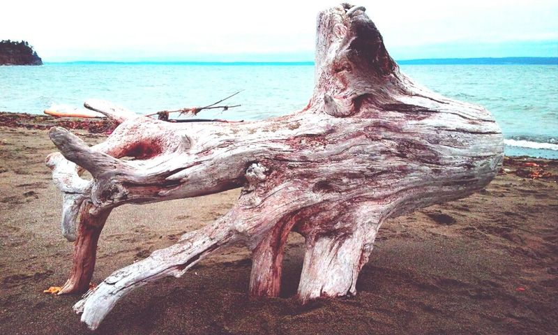 The Driftwood Taking Photos Eye4photography  Nature_collection I Like My Style
