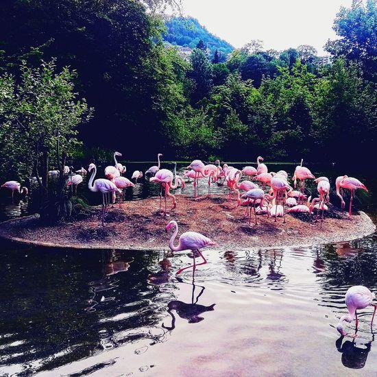 Flamingo Paradise Flamingo Colony Freshwater Bird Water Slide