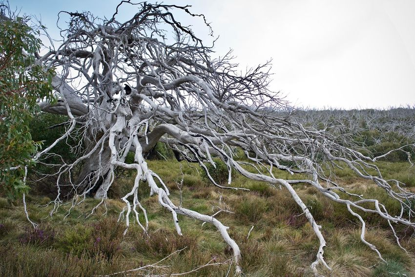 Tree Nature Nature Photography Forest Land Tranquility Outdoors Bare Tree Leica Tree Hiking Scenery Dead Tree Old Tree