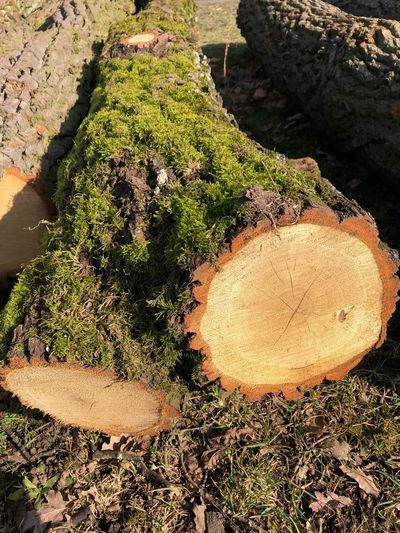 A day in the park Log Timber Stack Nature No People Tree Ring Tree Wood - Material Growth Outdoors Close-up