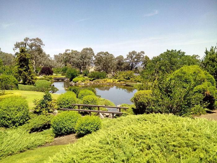 Plants and trees growing in memorial garden