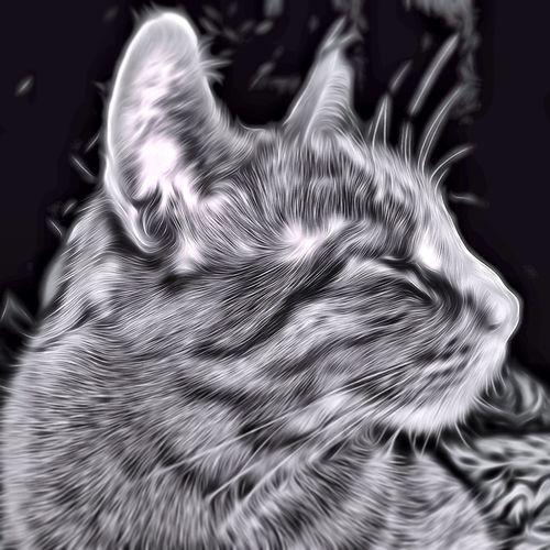 Black & White Catsofinstagram TangledFX