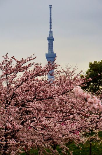 Tokyo Sky Tree Cherry Blossoms Flowers Spring Tokyo Found On The Roll The Photojournalist - 2016 EyeEm Awards Nature's Diversities The Street Photographer - 2016 EyeEm Awards The Great Outdoors - 2016 EyeEm Awards Ultimate Japan