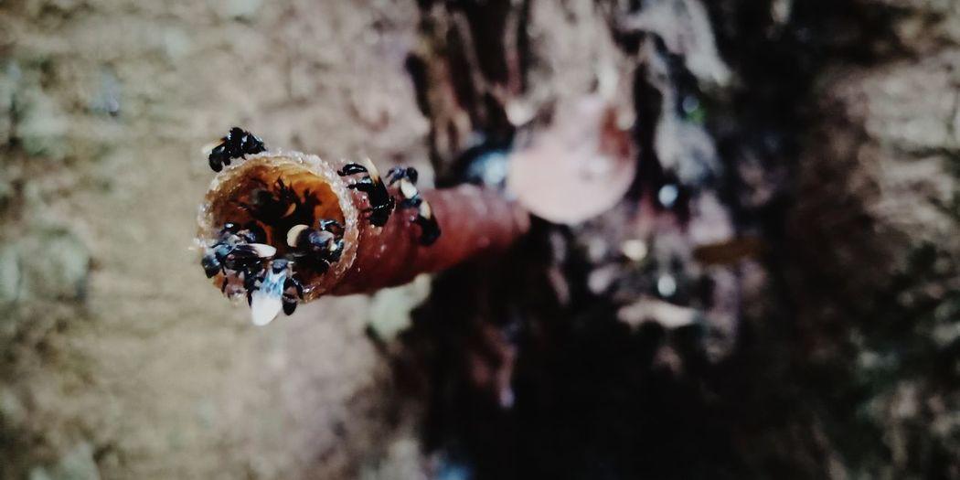 Honey Bee Honey