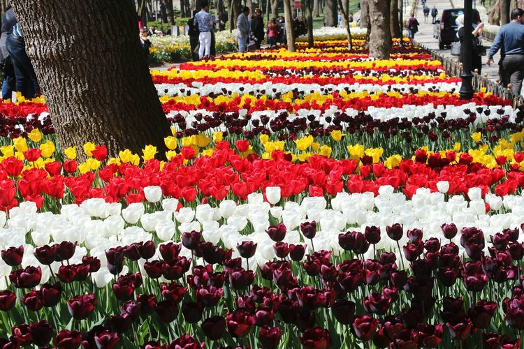 Multi colored flowering plants in park