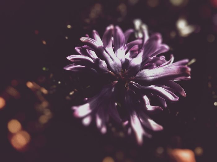 Hyacinth Flower Hyacinth Pink Flower Macro Dark Edit Light And Shadow Still Life Dreamy Organic Shapes Blossom Circle Blur Space Showcase April