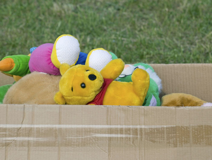 soft toys in cardboard box on lawn Box Cardboard Box Memories Toys Animal Animal Representation Animal Themes Childhood Close-up Grass Group Of Objects Lawn Medium Group Of Objects No People Nostalgia Outdoors Packing Soft Toys Stuffed Toy Teddy Bear Toy Variety