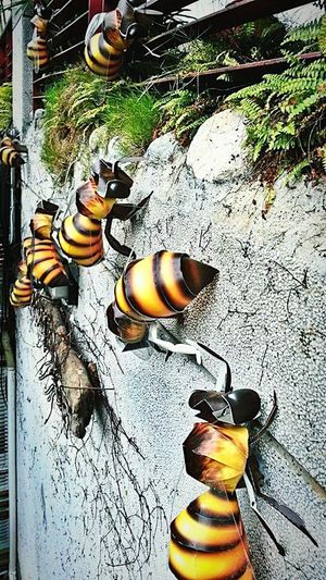 Bees Cardboard World Bees Mycapture Travelgram Travel Photography Outdoor Photography Outdoor Pictures Outdoor Art Yellow And Black Striped Bug Taiwan Cardboard King ArtWork Arts And Crafts 43 Golden Moments
