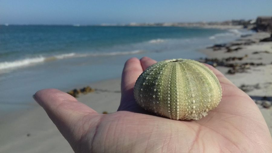 Cropped hand holding sea urchin at beach