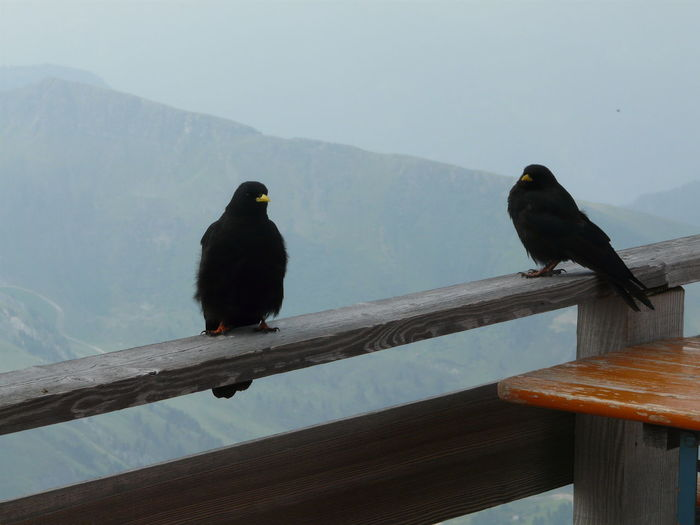 Two birds perching on railing
