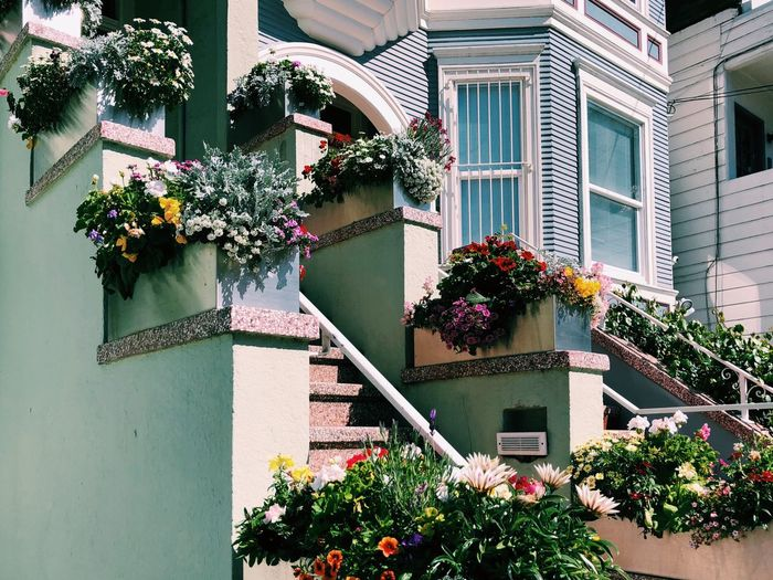 Flower power! Plant Architecture Built Structure Building Exterior Flowering Plant Flower Building Growth No People Potted Plant