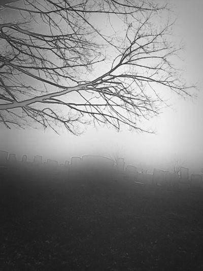 Truly graveyard beauty...through the mist.