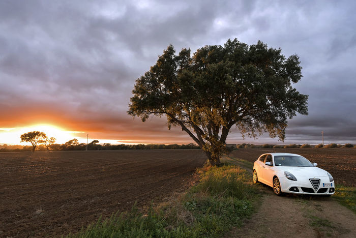 Car Tree Transportation Cloud - Sky Landscape Sunset No People Road Day Sky Outdoors Silence Backgrounds Nature Rural Scene Alfa Romeo Giulietta Perspectives On Nature Nikond750 Trees Fiat Italianstyle