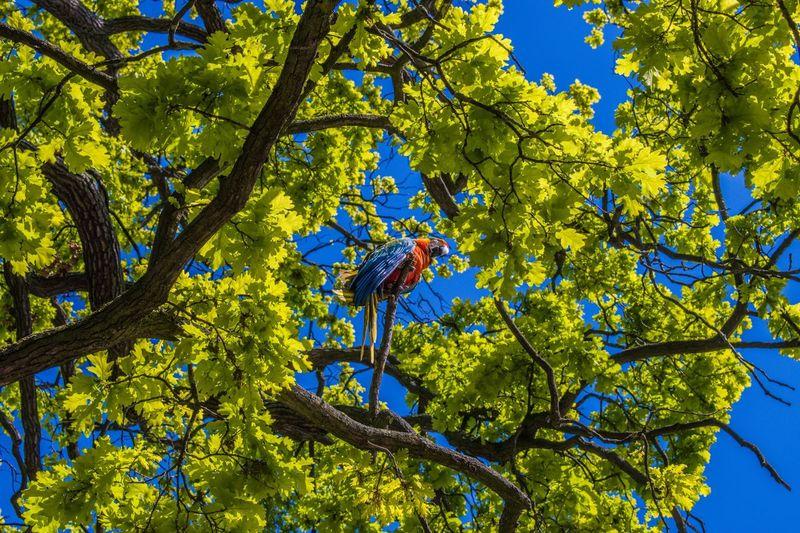 Parrot Sky