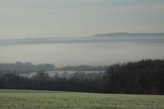 Early Morning Mist Beauty In Nature Cloud - Sky Country Countryside Early Field Green Color Horizon Over Land Idyllic Landscape Mist Mist Over Fields Misty Morning No People Non Urban Scene Non-urban Scene Open Land Outdoors Rural Scene Sky The Cotswolds Tranquil Scene Tranquility Tree