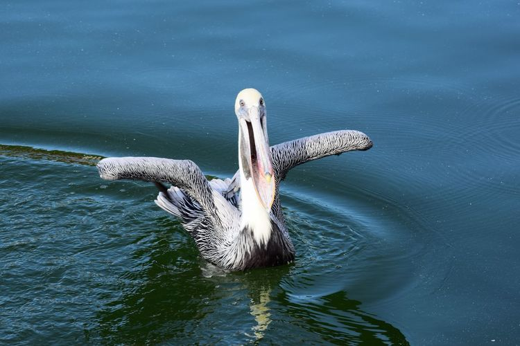Winging it Bird