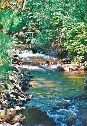 Shadowon Water