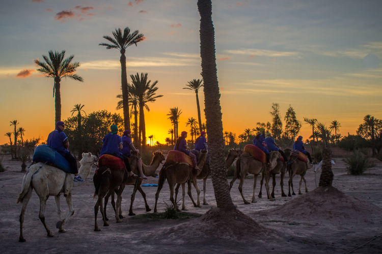 Desert ride Adventure Animal Animal Themes Colors Desert Domestic Animals Horizontal Horse Large Group Of People Light Mammal Marrakech Morocco Outdoors People Sahara Sky Sun Sunset Tree Working Animal