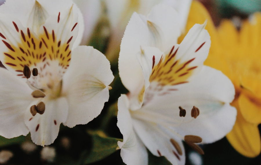 Flower Close-up Blossom Flower Head Fragility Springtime Petal Plant Nature Beauty In Nature Canon T3i Canon_photos Digital Photo Digital Photography Canonphotography EyeEm Nature Lover Canon Photography EyeEm Best Shots EyeEm Gallery Freshness No People Autumn Beauty In Nature