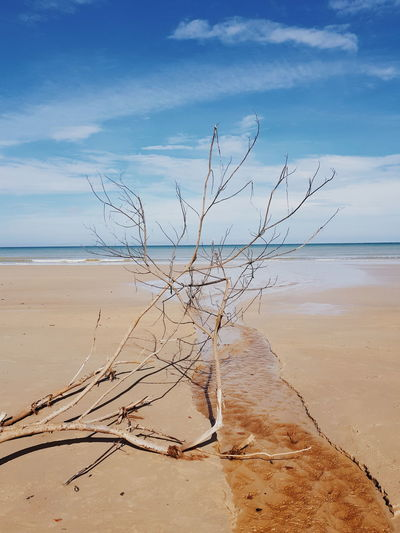 Hot day at the beach Dead Tree Beach Beauty In Nature Horizon Over Water Nature No People Sand Scenics Sea Shore Tranquil Scene