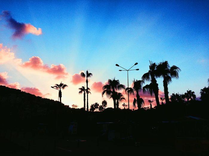 Summer 2015 🌤⛅️🌥 Turkey Summer Palm Trees Sunset Purple Black First Eyeem Photo
