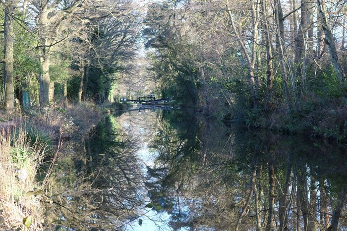 Basingstoke Canal Beauty In Nature Canal Day Forest Growth Nature No People Outdoors Outdoors Photograpghy  Path Reflection Scenics Surrey Countryside Tranquility Tree Tree Reflections Water