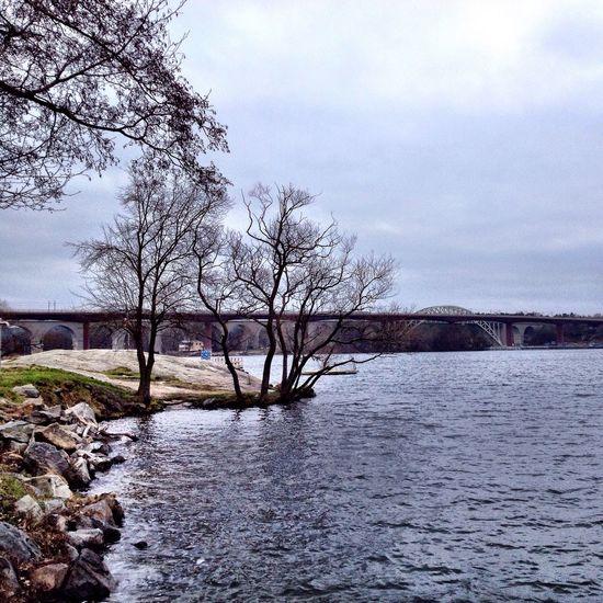 Off Season Bridge Trees