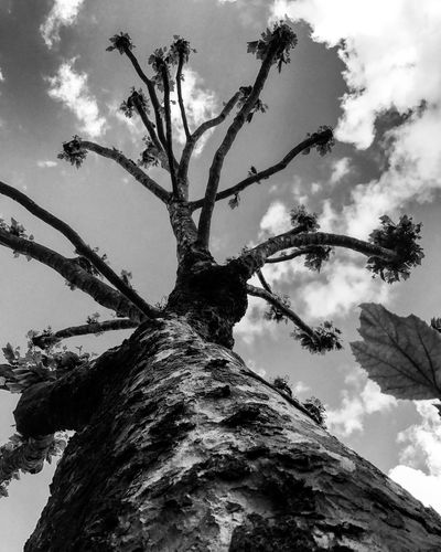 Black And White Low Angle View Tree Bark Beauty In Nature Close-up Growth Day Outdoors No People First Eyeem Photo