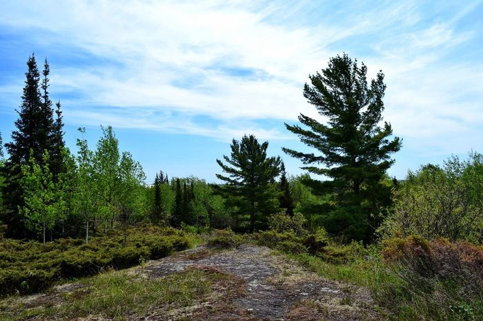 Biodiversity Trees Canadian Shield  Outdoors Forests Botany Foliage Grass Idyllic Scenery Landscape Field Non-urban Scene Rural