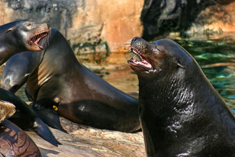 High angle view of sea lion
