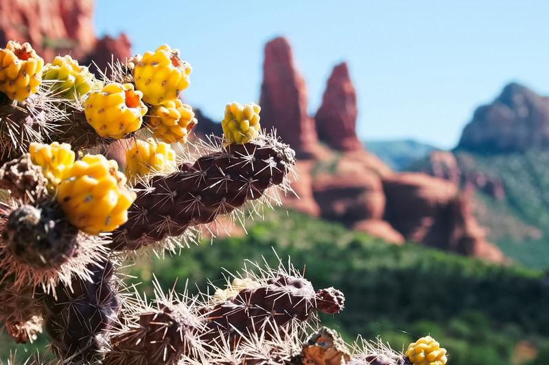 A thorny cactus