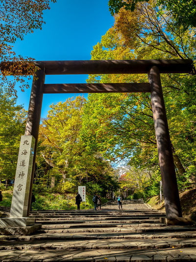 Hokkaido Shrine side entrance through the Maruyama-Koen Tree Plant Nature Day Autumn Real People Sky Group Of People Outdoors Staircase Walking Rear View Park Hokkaido Shrine Sapporo Hokkaido Japan EyeEmNewHere Olympus OM-D E-M1 Mark II M.zuiko 12-40mm F2.8 Pro Streetphotography