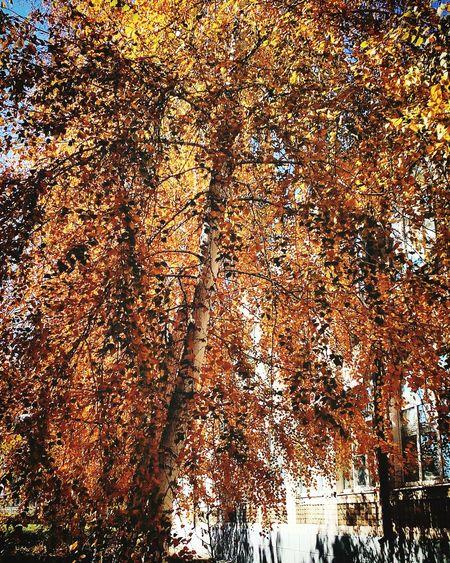 осень прекрасна 🌾🍂🍃 In Russsia Instagood в России