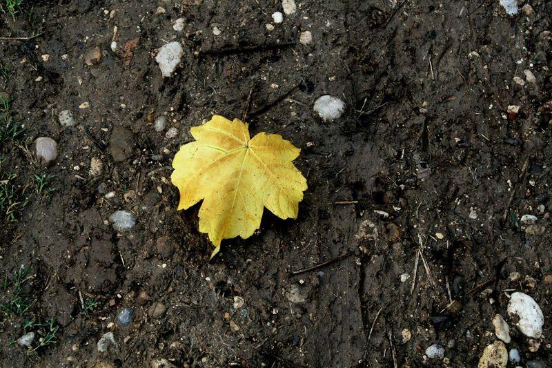 IRAN ; Mazandaran Hatef Qaemshahr Autumn