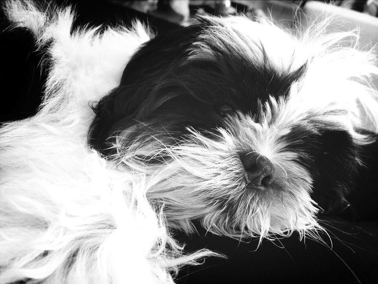 Dog My Dogs Are Cooler Than Your Kids Sleeping Black And White