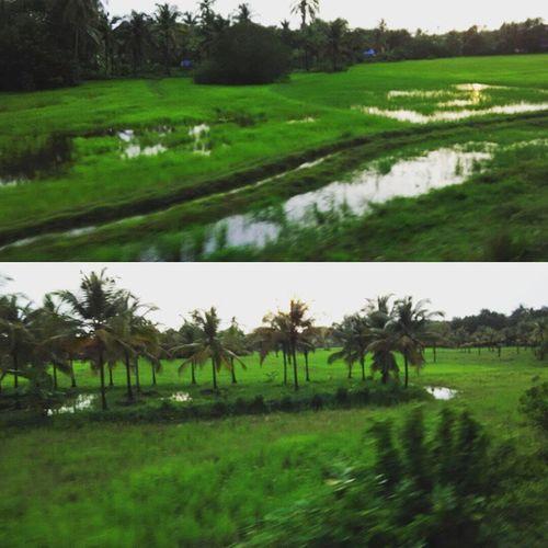 Kerala ,GodsOwnCountry ,Xiaomiclick ,Xiaomipics ,Redmi1s