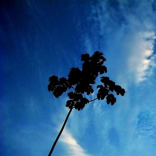 Sky And Trees Trees Siluette TreePorn