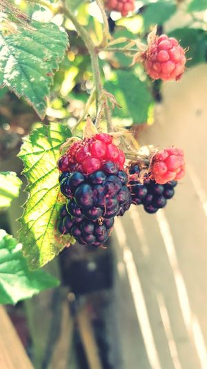 Berry Fruit Sunshine Tree Fruit Leaf Red Branch Agriculture Close-up Plant Food And Drink