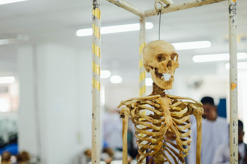 Body & Fitness Bones Bone  Close-up Day Focus On Foreground Indoors  No People Skeleton