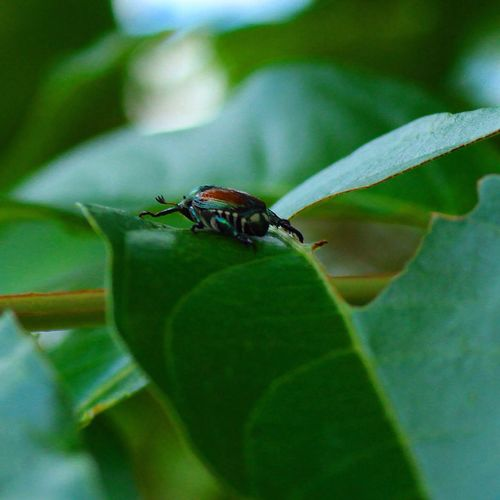 Abugslife Bugsofeyeem hanging out on a leaf Hanging Out Taking Pictures Leafs