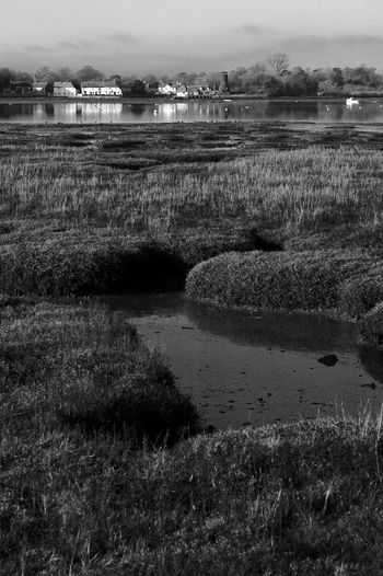 Distant Oak Black & White Hayling Island  Pint Beauty In Nature Blackandwhite Day Field Grass Lake Landscape Nature No People Outdoors Plant Reflection Royal Oak Scenics Tranquil Scene Tranquility Water