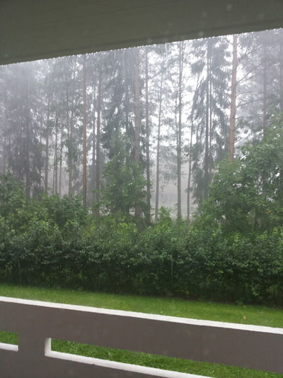 Last summer Nature Rainy Day