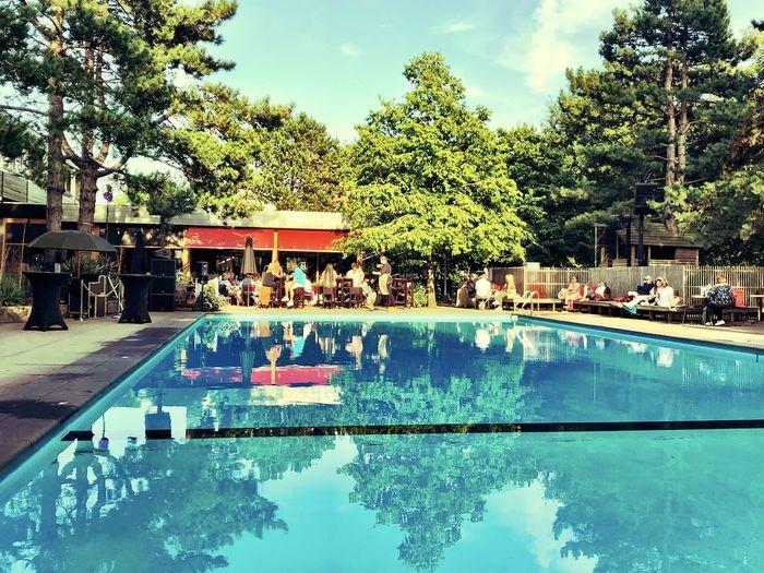 Water Tree Pool