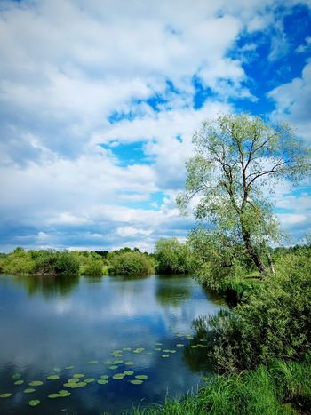 Cloud - Sky Tree Nature Sky No People Beauty In Nature Plant Day Outdoors Tranquility Landscape Water Scenics Growth Springtime Flower Freshness