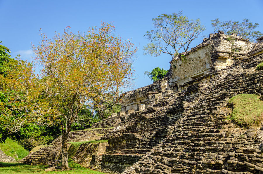 Ruined temple in the ancient Mayan city of Palenque in Mexico Ancient Archeology Building Chiapas Forest Heritage History Jungle Maya Mayan Mayan Ruins Mexico Nature Old Outdoors Palenque Palenque, Chiapas Precolumbian Pyramid Religion Ruin Stairs Stone Temple Unesco